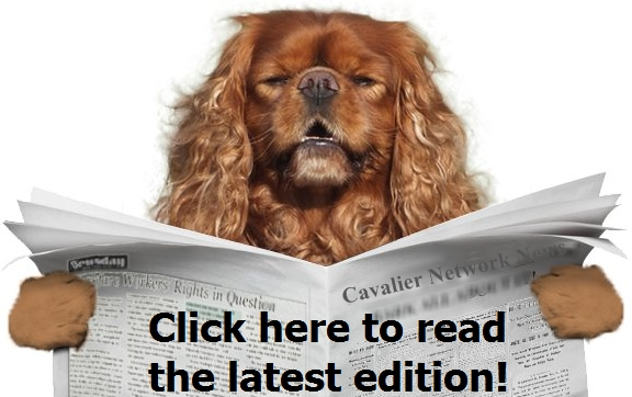 Story of Jake Puppy Mill Project Pet Rescue, Pet Adoption
